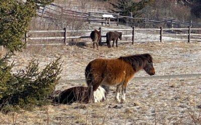 Where the Wild Ponies Roam